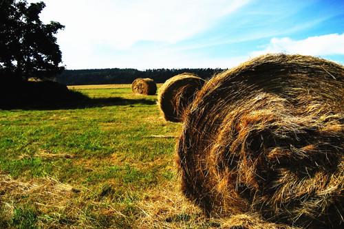 如何通过土地流转让两万亩土地发挥经济效益?