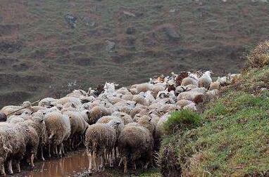 2017年鞍山市台安县积极推进畜牧业供给侧改革