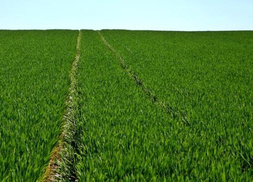 巢湖市乡下有几亩土地适合用来干什么?