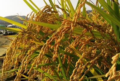 2017年陕西省政策性农业保险试点工作实施方案