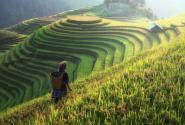 2019年农村土地流转致富分析,农民创业特色农业!