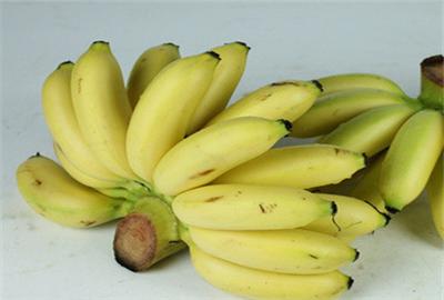 小米蕉多少钱一斤?有哪些功效及作用?