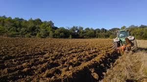 在松江区做什么项目挣钱?乡下有土地能用来干什么?