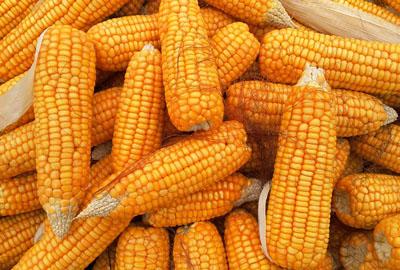 2017年黑河市玉米和大豆生产者补贴工作方案