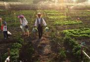 2017年办家庭农场国家能补助多少?