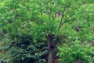 2017年林业补贴项目有哪些?补贴标准是怎样的?该怎么申请?
