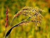 中国未来农业发展前景分析:五大趋势蕴含无限潜力!!