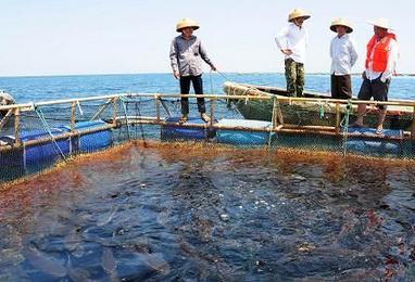 海南目前适合发展什么养殖项目?