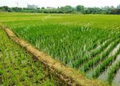 农业区域信贷政策调整,粮食、棉花、苹果、花卉、烟叶等已陆续修订