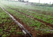甘肃省推广水肥一体化技术