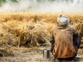 国家的种粮补贴有哪些你知道吗?