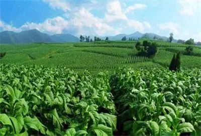 南京市农业支持保护补贴政策:每亩补贴118元