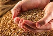 有机食品是什么?发展有机农业种植应注意什么?