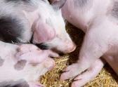 畜禽养殖污染如何处理?各地区明确粪污处理发展方向!