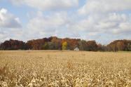 土地流转的两种方式,新政策出台后农民可以这么做!