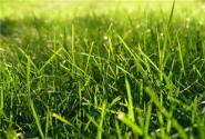 2017退耕还林还草政策:补助标准提高到400元/亩