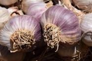 紫皮蒜产地在哪?和白皮蒜的区别?长毛了还能吃吗?价格贵吗?