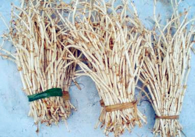 新鲜的、干的鱼腥草长什么样子?做法有哪些?功效与禁忌有哪些?