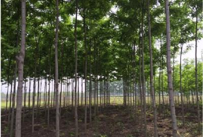 2018福建省农林业经济生产总量_福建省林业杨细明