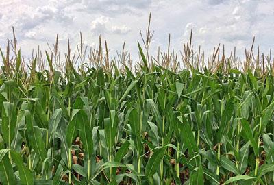 2017年丽江市关于扎实推进农业供给侧结构性改革加快培育农业农村发展新动能的实施意见