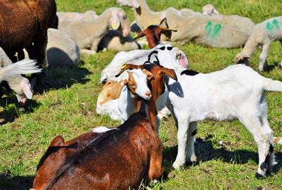 黑龙江省龙江县2017年上半年畜牧业发展势头良好