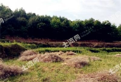 邵阳、邵东县、邵阳县土地面积分别是多少?种植什么赚钱?