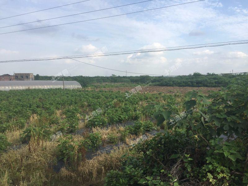 湘潭市做什么生意赚钱?老家有三亩土地做什么项目赚钱?