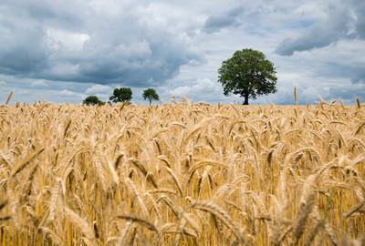 上半年陕西农业生产形势稳中向好
