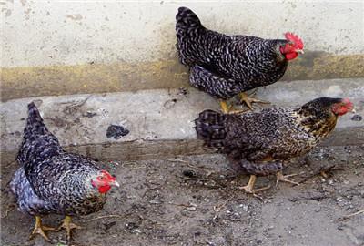 湖南8县入围2017年畜禽粪污资源化利用重点县,国家将给予哪些支持?