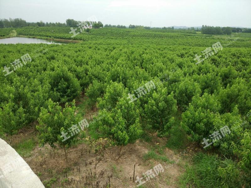 襄阳市是几线城市?土地面积是多少?适合种什么树?
