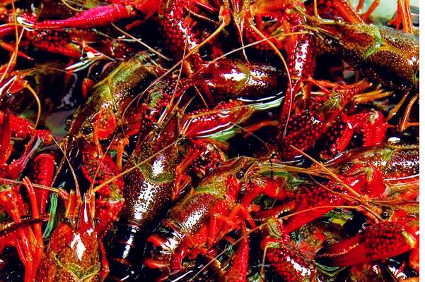 小龙虾需要放进清洗机清洗寄生虫吗?体内有寄生虫吗?怎么杀死?