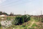 江苏太仓市土地面积有多大?通常能种植哪些作物?