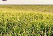 农业补贴那么多钱,农民怎么才能拿得多又准?