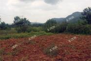 2018年农村土地确权后,荒废土地或将实现规模化流转经营!