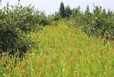 2017年静宁县人民政府关于支持返乡下乡人员创业创新促进农村一二三产业融合发展的实施意见