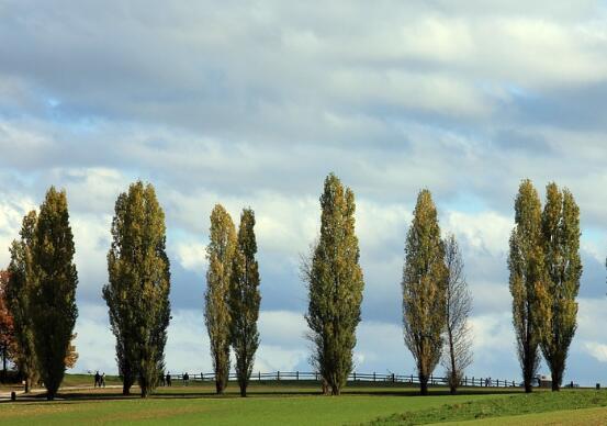喀什市人口有多少?土地总面积多少?适合种植什么药材、树木、农作物?