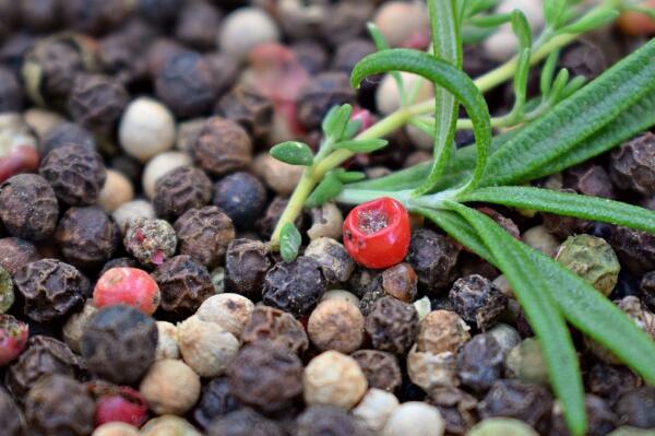 红花椒好还是青花椒好?每亩收入多少钱?国家补贴多少?