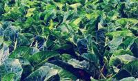 中国农业春天!未来10年有机农业将成为主力军!