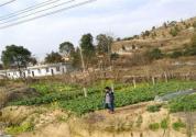 农村老宅基地确权时,如何判断宅基地的取得时间?