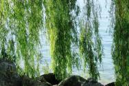 2018年苗木行情怎么样?种植什么绿化苗木赚钱?(附价格表)