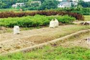 没有土地的农民注意了!这些情况下土地可以重新调整!