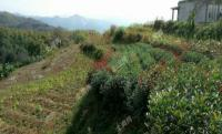 青田县土壤污染防治工作方案