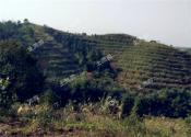 第二轮土地承包到期后再延长三十年,带给农民更多制度红利