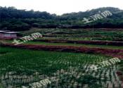 最新消息:2028新一轮农村土地承包期,这几类人即将不能再承包土地