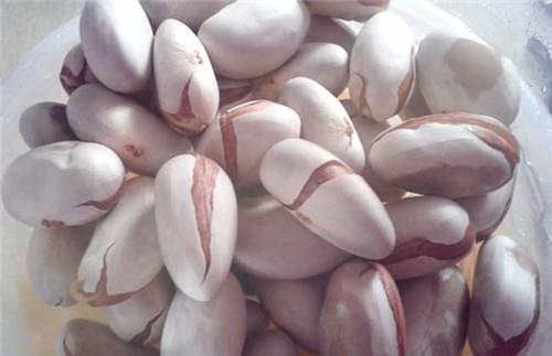 菠萝蜜核可以种盆栽吗 怎么种