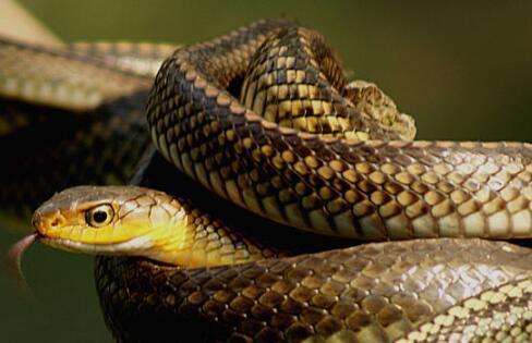 水律蛇多少钱一斤?养殖前景如何?附养殖成本及利润分析