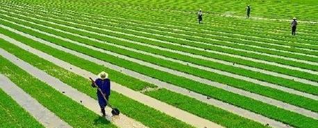 2016年农村土地流转价格多少钱一亩?