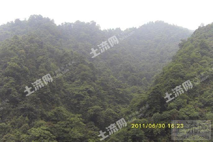 四川芦山县大川镇720亩优质林地转让