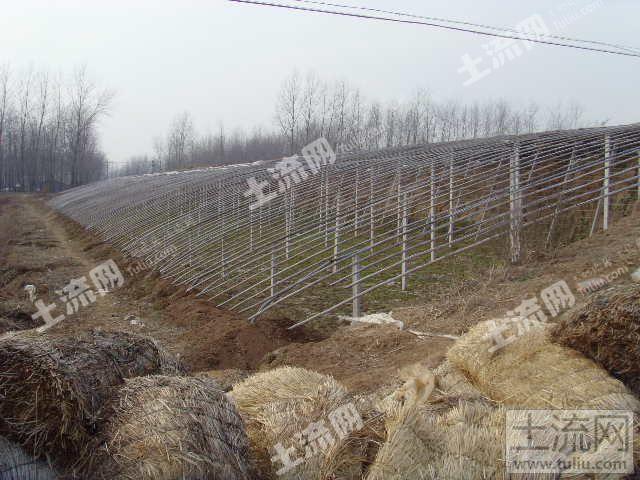 江苏省泗洪县金锁镇300亩 70个日光温室大棚 转让
