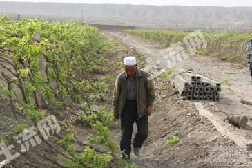 新疆吐鲁番葡萄沟附近15亩土地转让